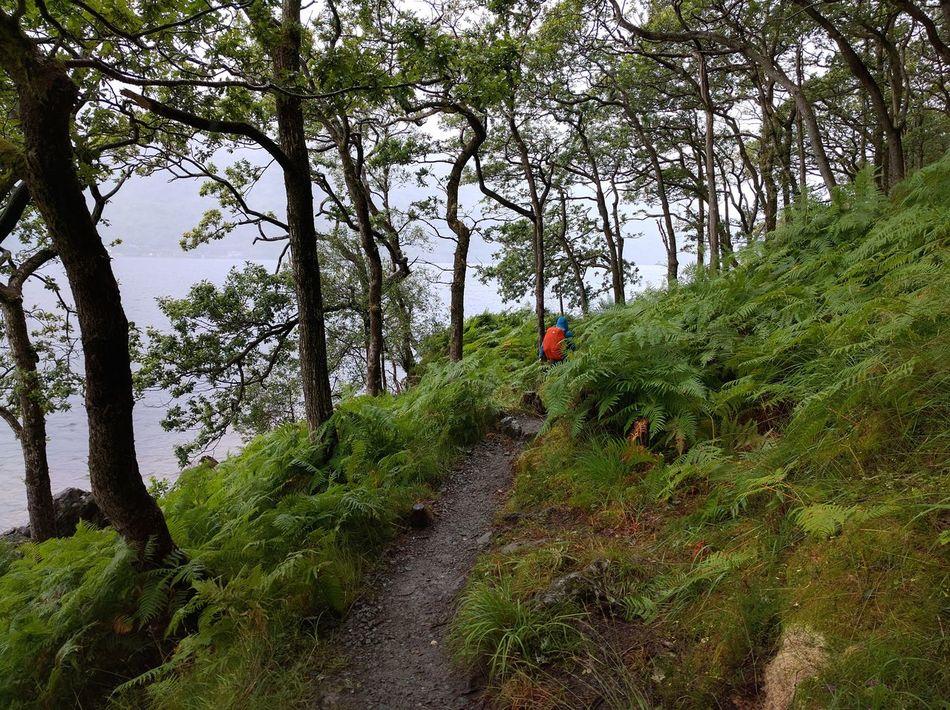 LochLomond Loch Lomond Trail In The Woods Walking In The Forest Walking In The Nature Walking Alone... Jungle Trekking Outdoors Westhighlandway West Highland Way Wildlife & Nature Wildnature Scotland Travel