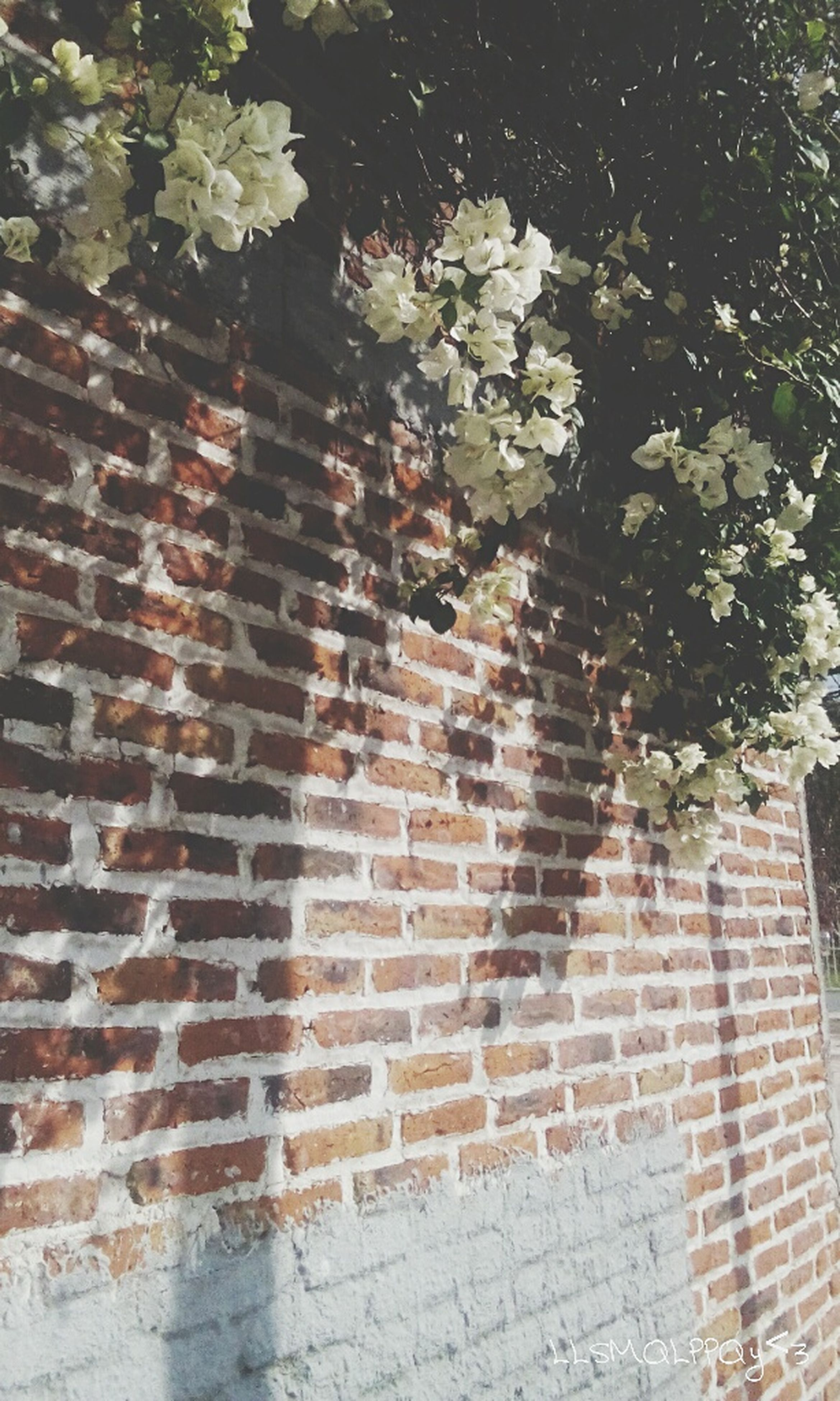 brick wall, flower, fragility, wall - building feature, architecture, built structure, tree, growth, freshness, springtime, plant, brick, day, branch, in bloom, outdoors, blossom, red, petal, no people, beauty in nature, cherry blossom