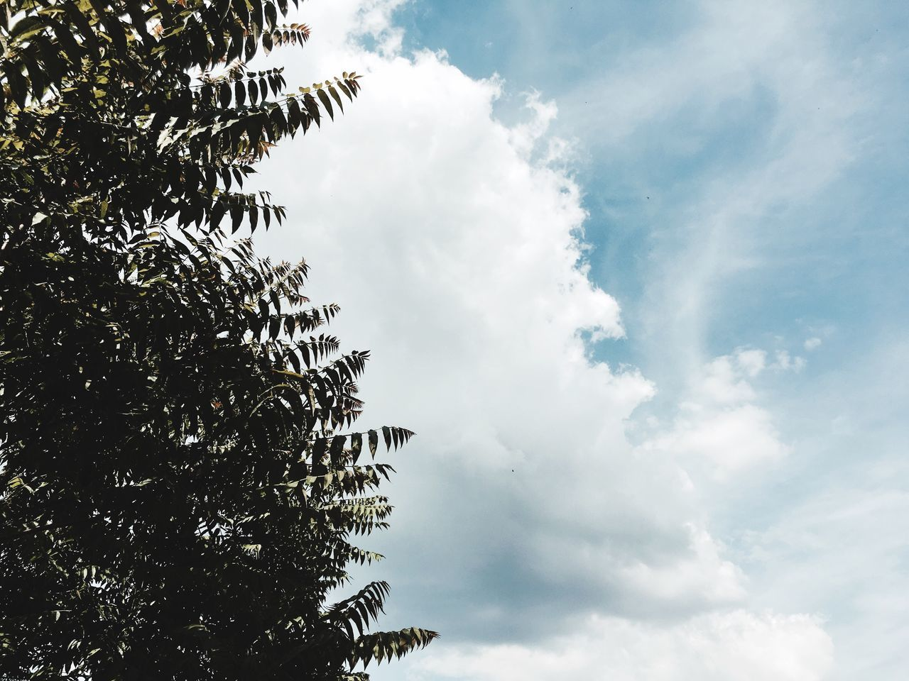 Low Angle View Sky Tree Cloud - Sky Day Nature Growth No People Beauty In Nature Outdoors