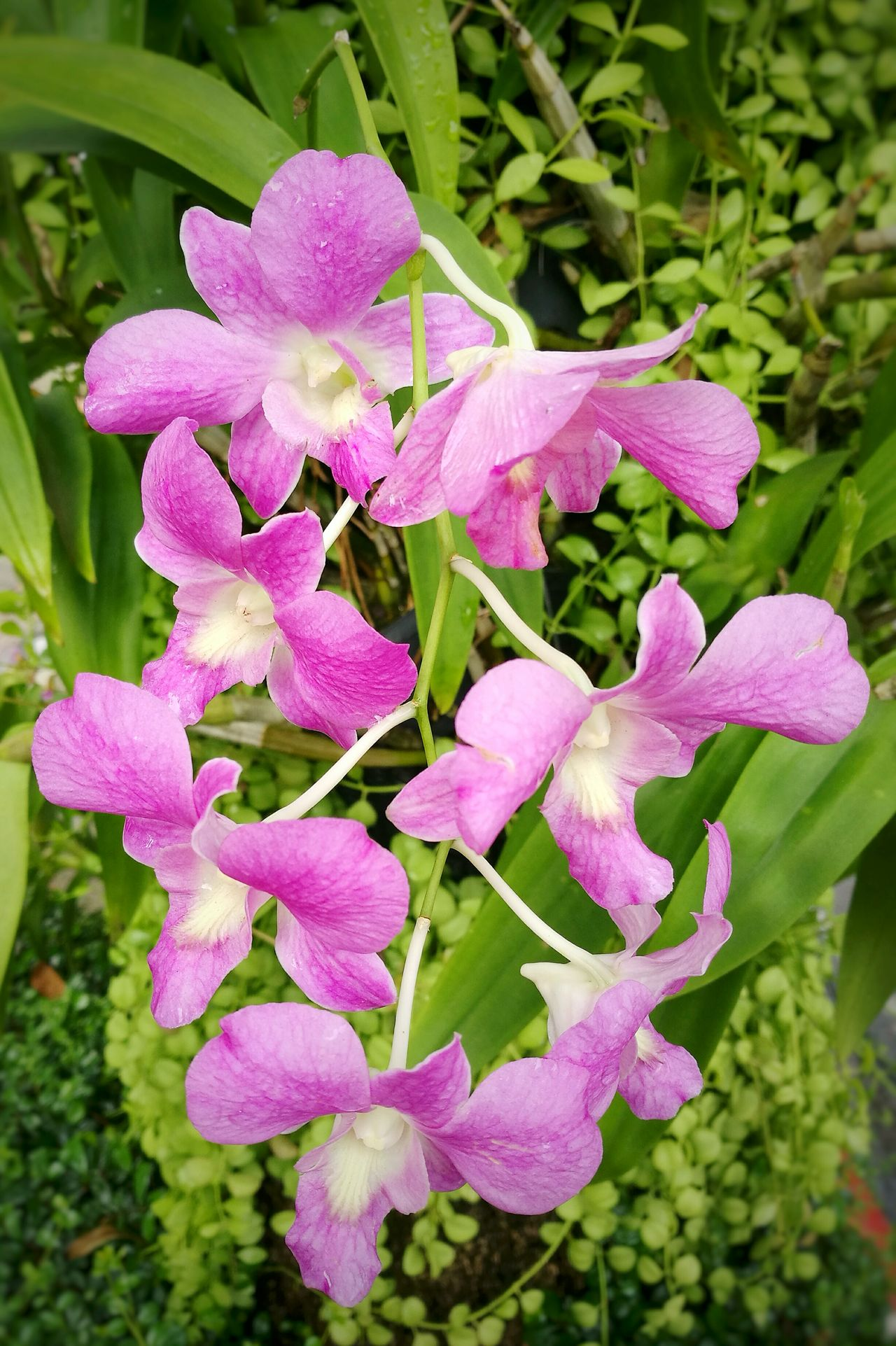 Orchid. Orchids Orchid Orchid Flower Orchid Blossoms Orchidslover Orchids Garden Orchids Collection Purple Flower Purple Flowers Flower Collection Flowers, Nature And Beauty Flowerphotography