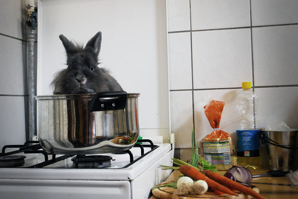 Beautiful stock photos of hasen, Animal Themes, Bizarre, Chopping Board, Close-Up