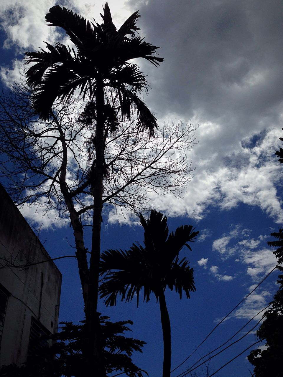 low angle view, tree, sky, cloud - sky, palm tree, silhouette, outdoors, nature, no people, growth, tree trunk, beauty in nature, day, building exterior, branch, built structure, architecture