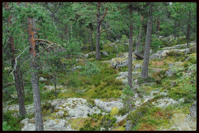 that summer was our honeymoon's journey in Karelia)) Travelling No Edit/no Filter Karelia The Explorer - 2014 EyeEm Awards