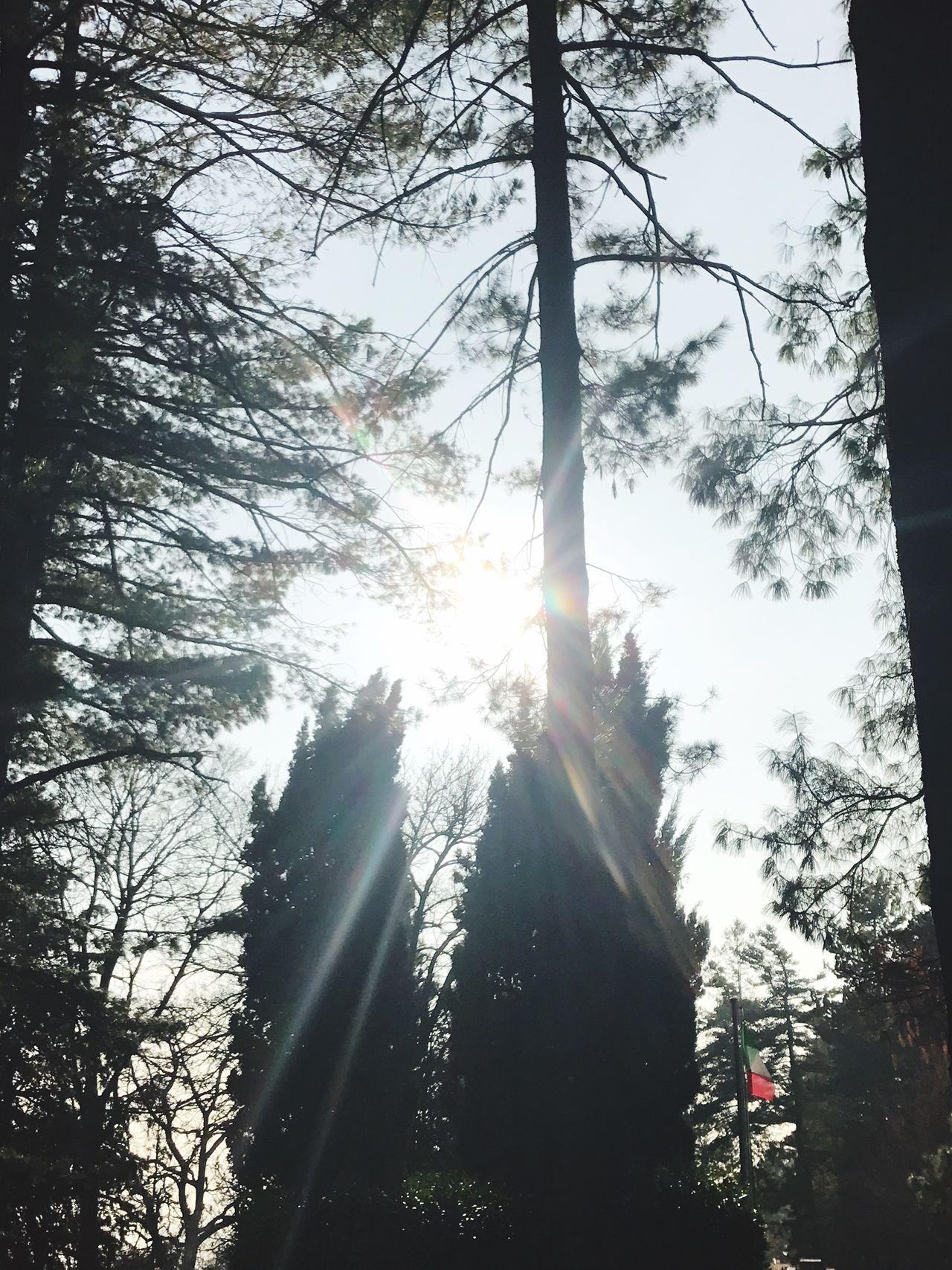 Nature Lover Naturelovers Nature_collection Low Angle View Lens Flare Sun Sunbeam Sunlight Shining Nature Tree_collection  Nature Collection Nature Photography Trees Conifers Coniferous Tree Landscape Nature Photography Landscape_Collection Tree_collection  Sunset Silhouettes Sun_collection