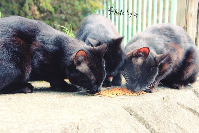 Cat Cat♡ Stray Cat 野良猫 猫 Cat Lovers 黒猫Love Black Cat Animal Playing With The Animals