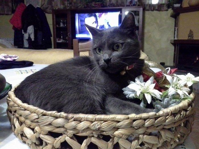 Cat Loving Flowers Relaxing