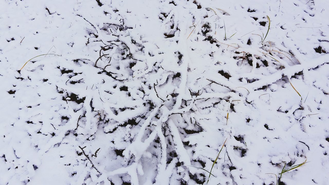 Snowshapes