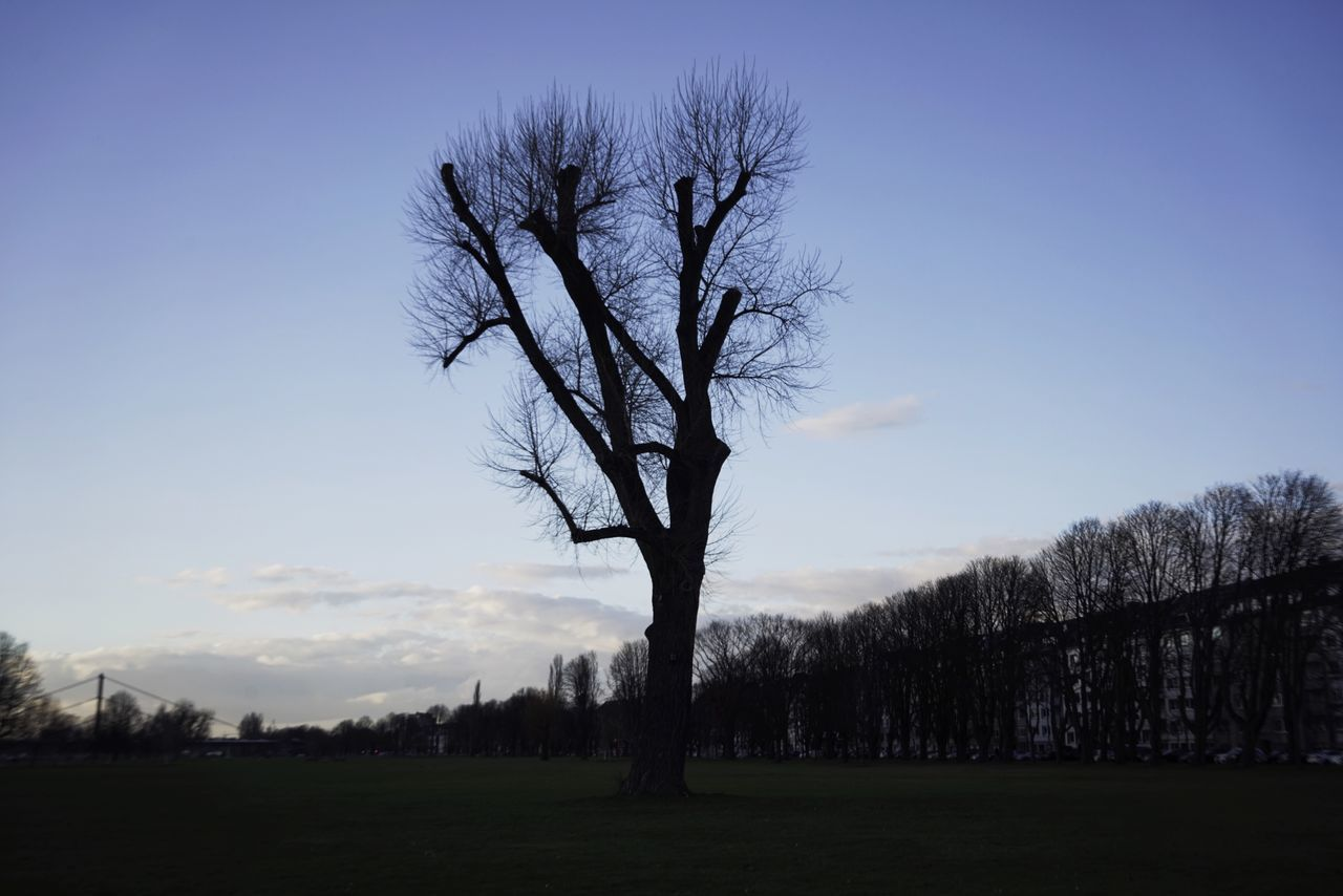 Bare Tree Tree Nature Tranquil Scene Lone Beauty In Nature Tranquility Sky Branch Landscape Clear Sky Blue Isolated Tree Trunk Outdoors No People Field Scenics Silhouette Day