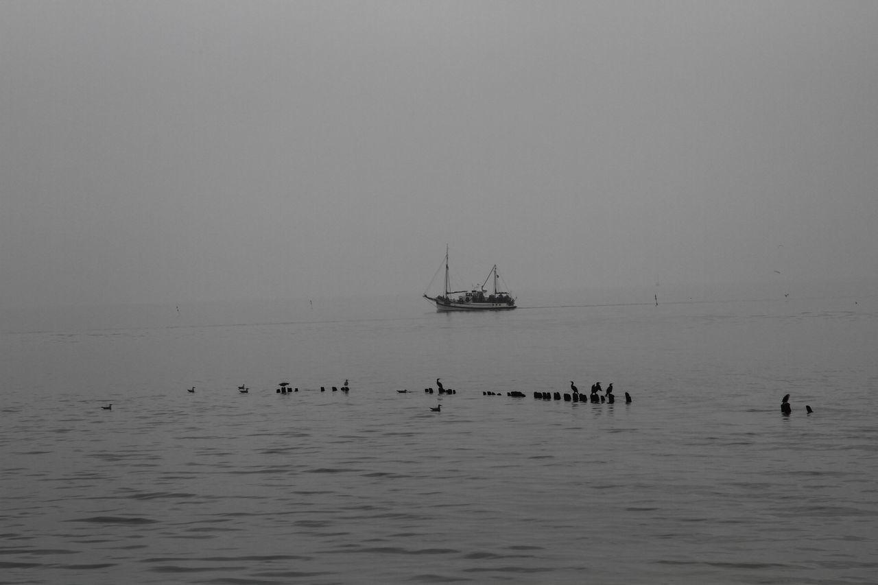 B&w Baltic Sea Bird Boat Sea Side Sea View Sea Views Ship Water Władysławowo