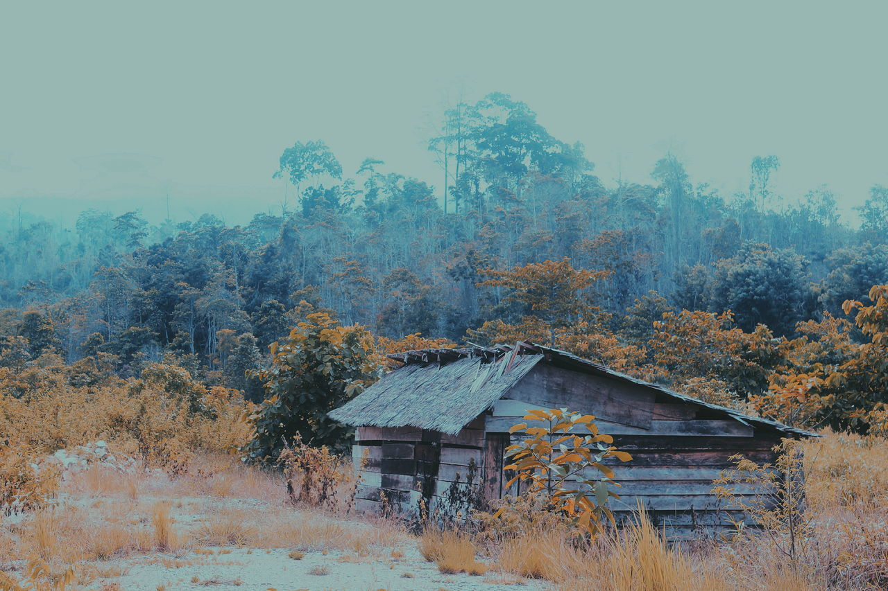 EyeEm Selects Live For The Story The Architect - 2017 EyeEm Awards EyeEmNewHere Sommergefühle Nature Beauty In Nature House Wood House Breathing Space Mix Yourself A Good Time