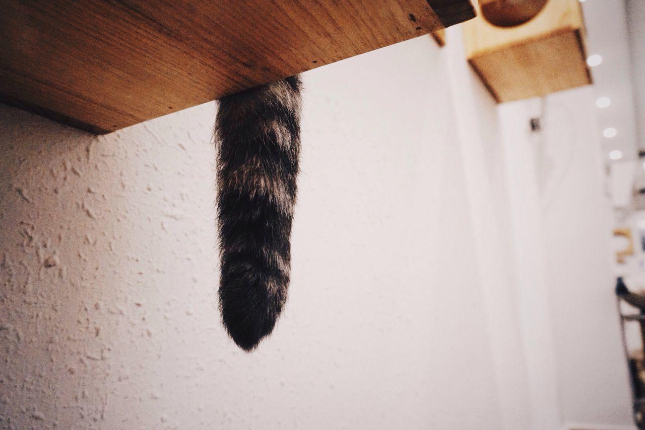 Cat Tail Cat Lovers ICat Cafe VSCO Vscocam A5100