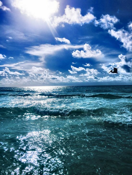 Can't believe my luck catching this guy mid-air! Cancun☀ Check This Out Pelicaninflight Morningsun ☀ Taking Photos Enjoying Life Oceanviews🌊 Waves Crashing Waveafterwave Waves, Ocean, Nature Skyporn Sky_collection Skyandclouds  Viewpoint Mybest_shot Mybestphotography Lovemylife beautifulmoment