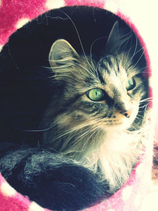 Occhi Di Gatto Eye Cat Enjoying Life Kitty Kitten Gatti Animals Loveofmylife ♥ Mustache Love Carolina Gatto Home Sweet Home Baffi Relaxing Moments Relaxing Home