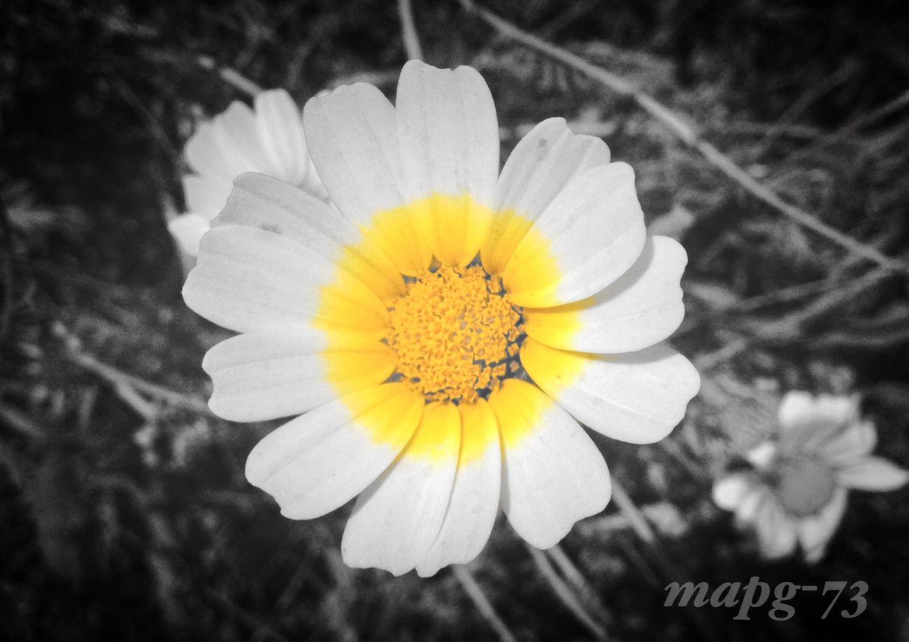 Flower Outdoors Nature Blackandwhite Taking Photos Eyeem Monochrome EyeEm Gallery