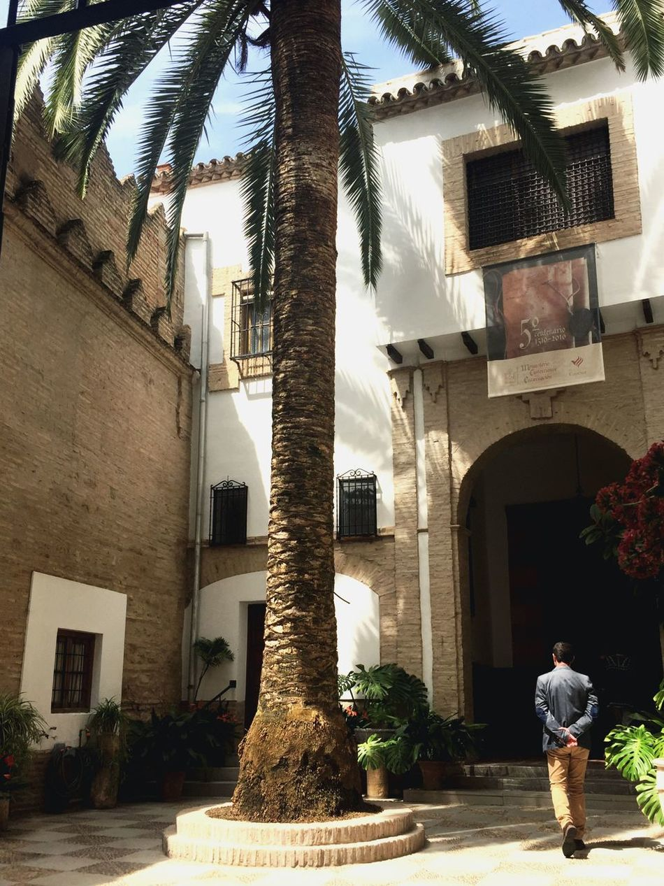 Patio Córdoba España Judería Palm Tree Typical