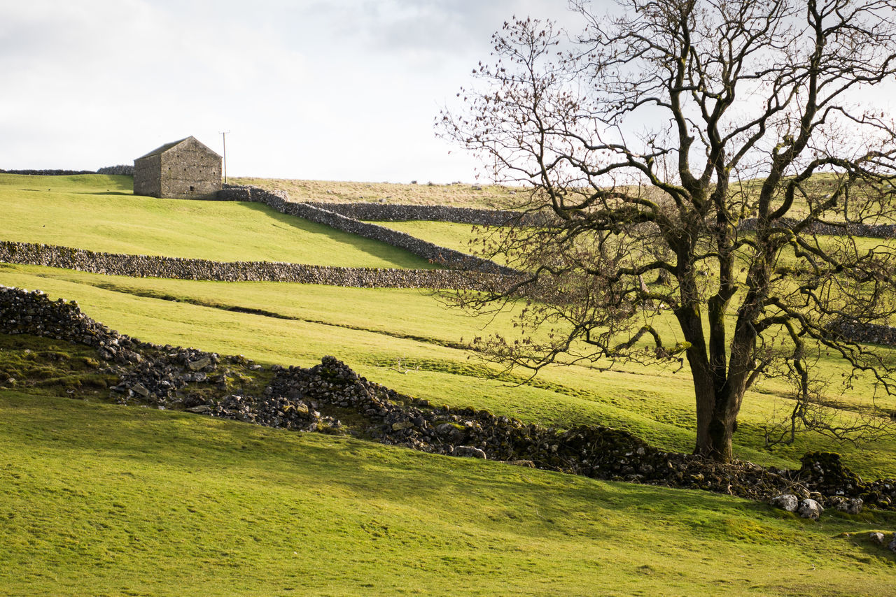 Agriculture Countryside Day Dry Stone Walls English English Countryside Farm Field Grass Green Color Landscape Nature Rural Scene Scenics Sky Sunlight Sunlight And Shadow Tree Walls Yorkshire Yorkshire Dales