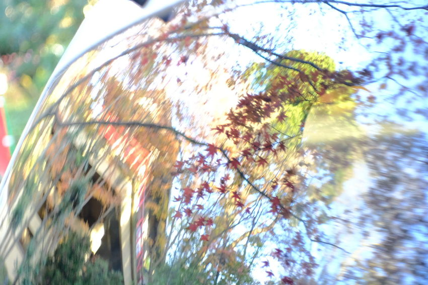 『15:20:43』 2016-12-02 Tree Close-up Day Outdoors No People Multi Colored Nature Water Backgrounds Fragility Animal Themes Web Plant Tree Low Angle View Leaf Hello Word Beauty Yellow Winter Beauty In Nature