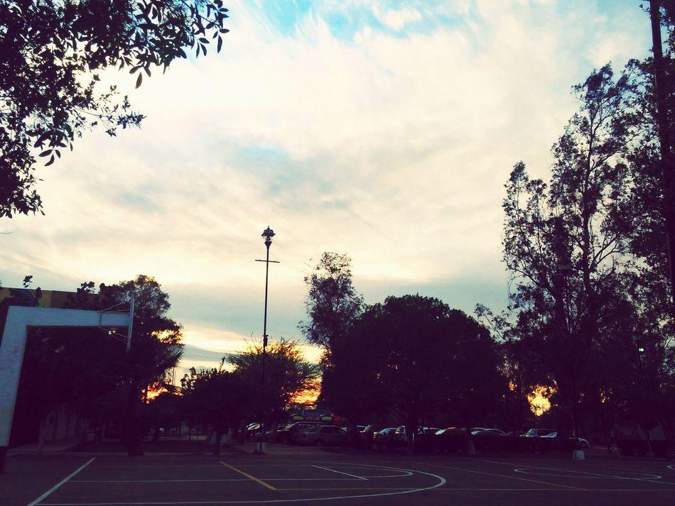 Afternoon Sky Trees UABC  Humanas Mexicali Tree Cloud - Sky Sunset Outdoors Dramatic Sky No People Nature Day