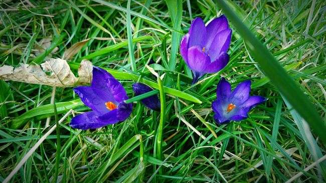 My Front Garden Wild Flowers