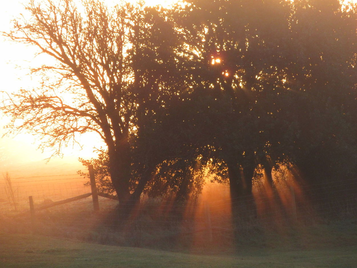 Backlit Dawn Misty Light Orange Color Peace Shafts Of Sunlight Silhouettes Trees