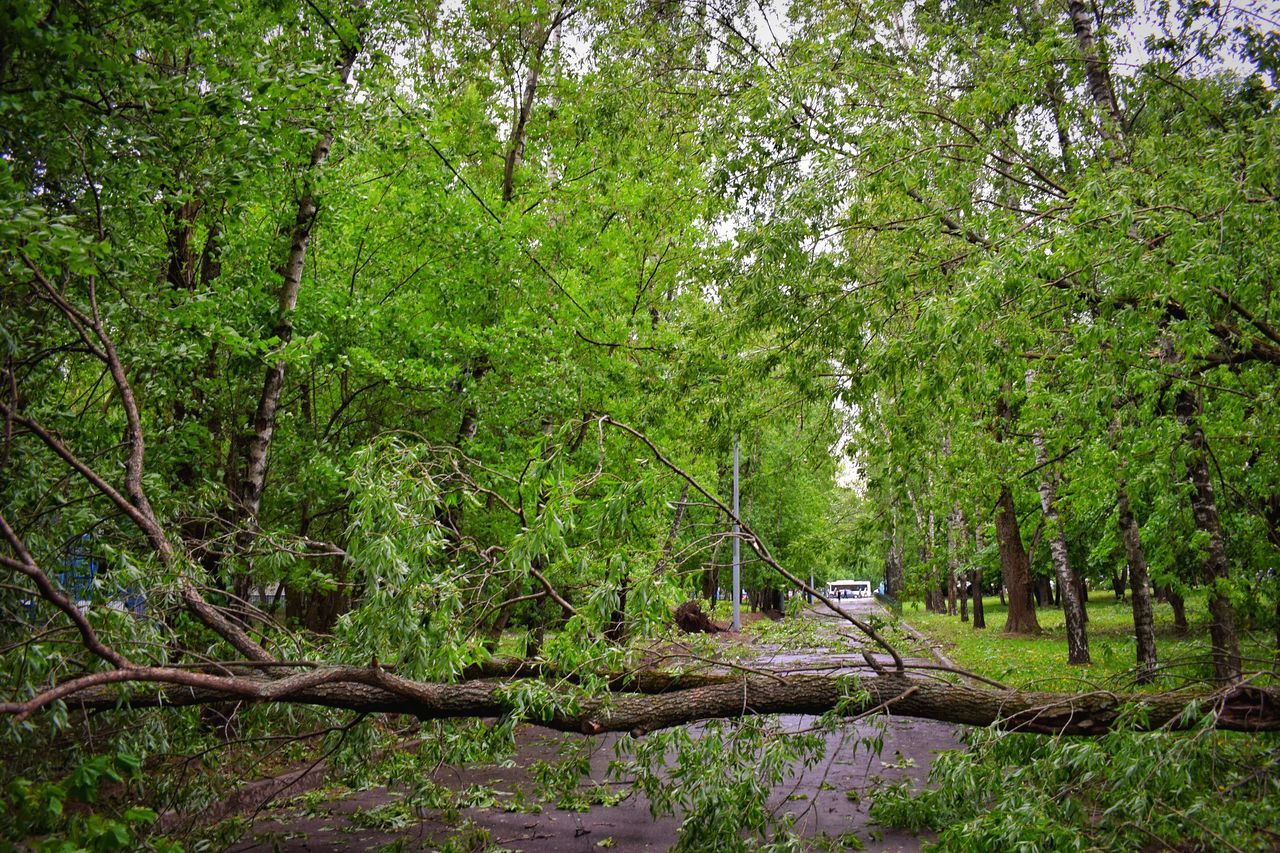 Fallen trees Tree Nature Forest Green Color Growth Outdoors Lush Foliage Tranquility Beauty In Nature Branch Tranquil Scene No People Day Tree Trunk Scenics Landscape Fallen Tree Fallen Trees Hurricane Damage How's The Weather Today?