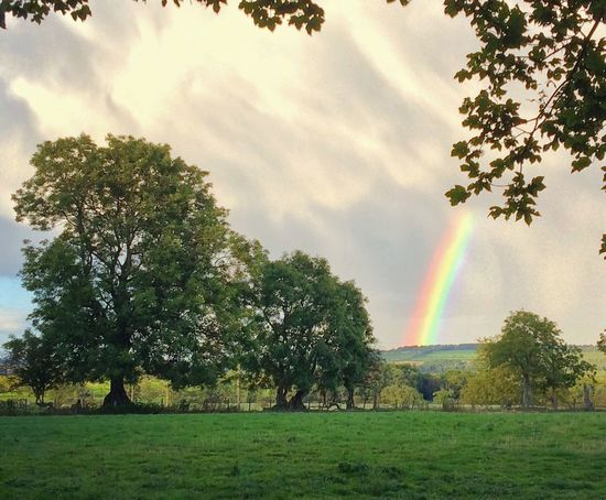 Rainbow Tree Multi Colored Beauty In Nature Scenics Tranquil Scene Landscape Tranquility Nature Growth Cloud - Sky Non-urban Scene Green Color Branch Day Remote Outdoors Grassy Sky