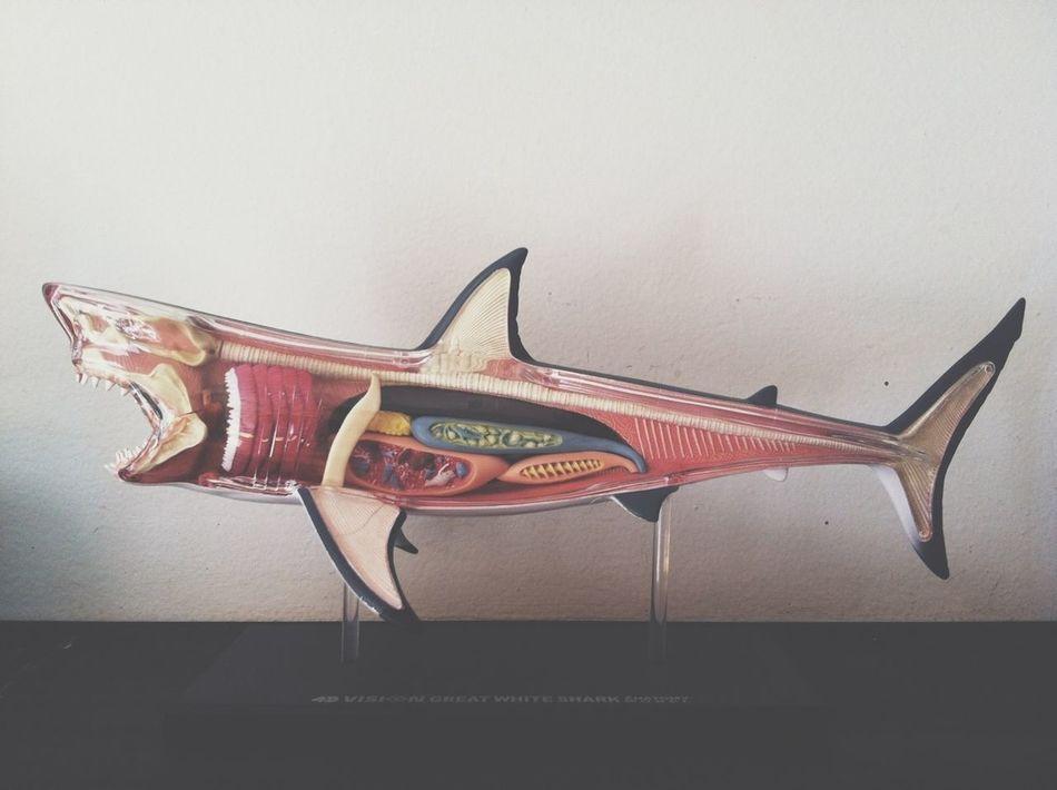 Beautiful stock photos of shark, Anatomy, Animal Representation, Animal Skeleton, Art