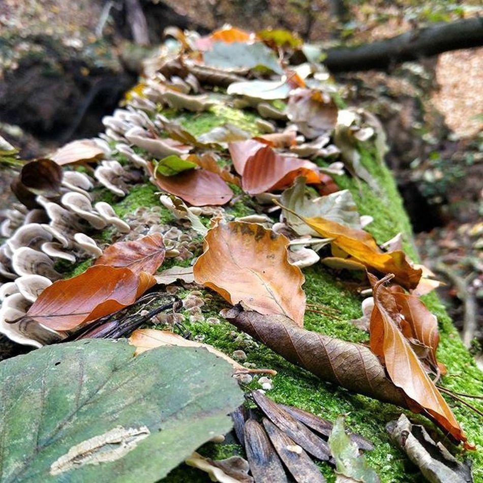 Las Drzewo Liscie Huba Mech Jesień