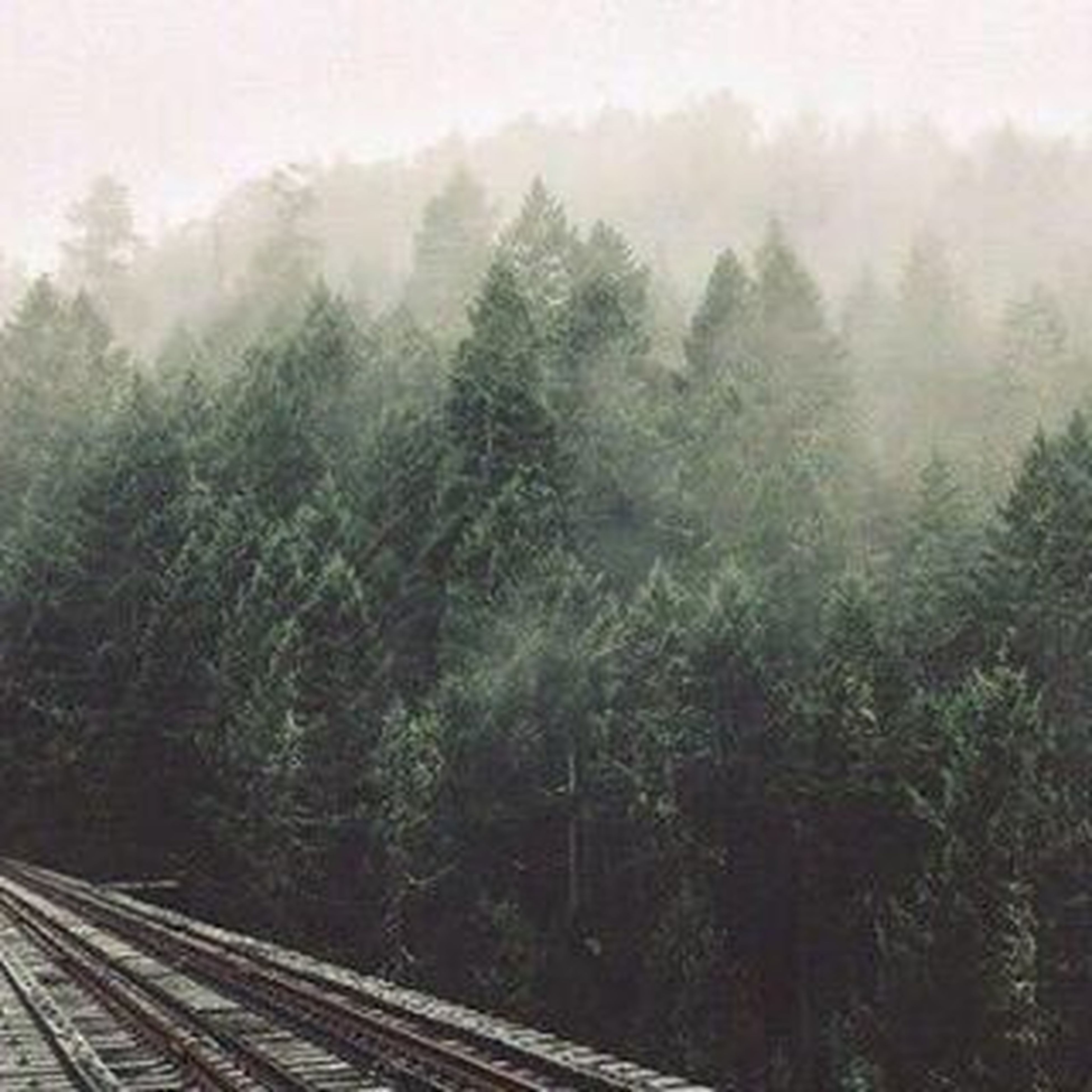 tree, fog, foggy, tranquility, tranquil scene, growth, nature, landscape, beauty in nature, weather, scenics, field, forest, sky, non-urban scene, day, fence, outdoors, plant, high angle view