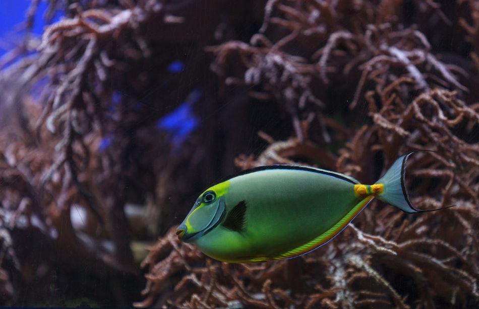 Beautiful stock photos of einhorn,  Close-Up,  Fish,  Focus On Foreground,  Horizontal Image