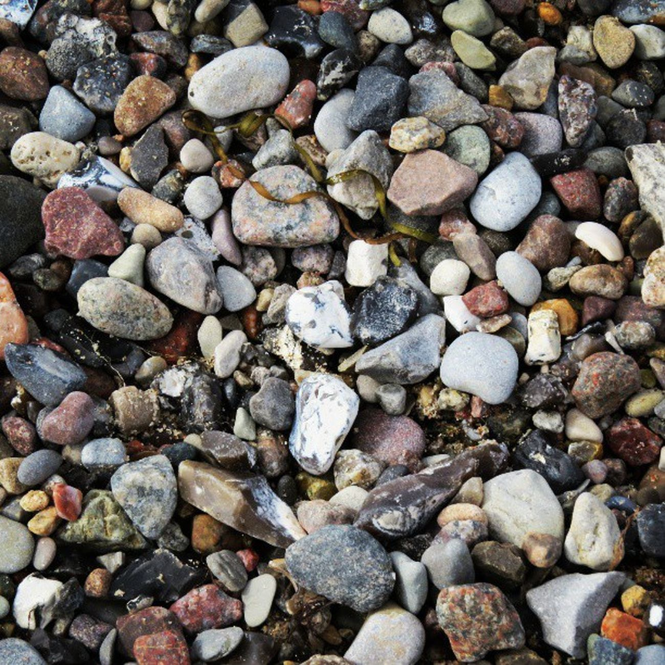 Ich Hasse Menschen , Tiere Und Pflanzen , Aber Steine , Steine Sind Okay . ♡ Alexandramiriam Wir Lieben Steine Steine Sind Cool