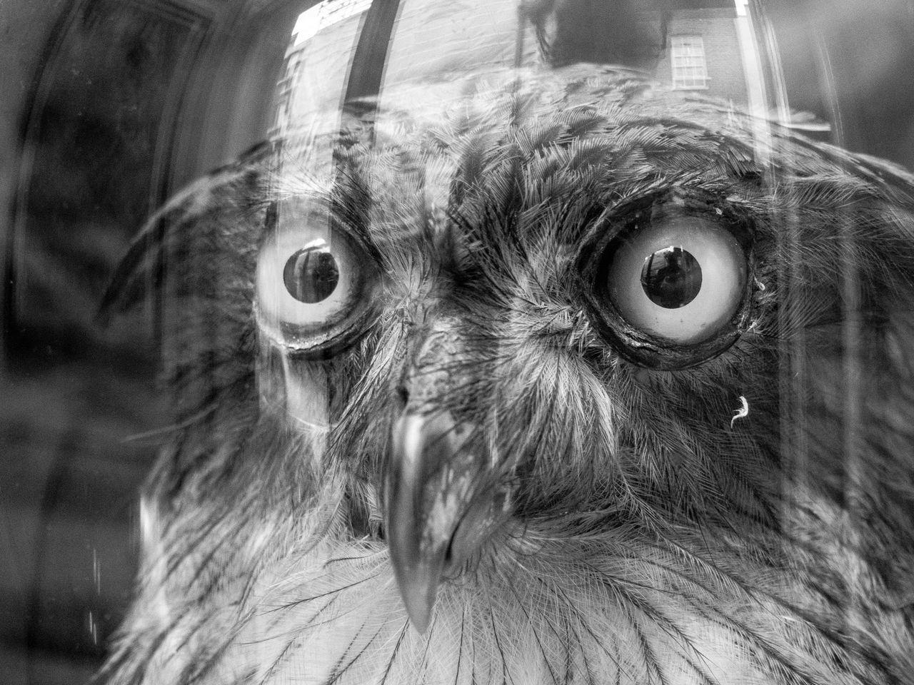 Beautiful stock photos of death, Bizarre, Close-Up, Day, Dead Animal