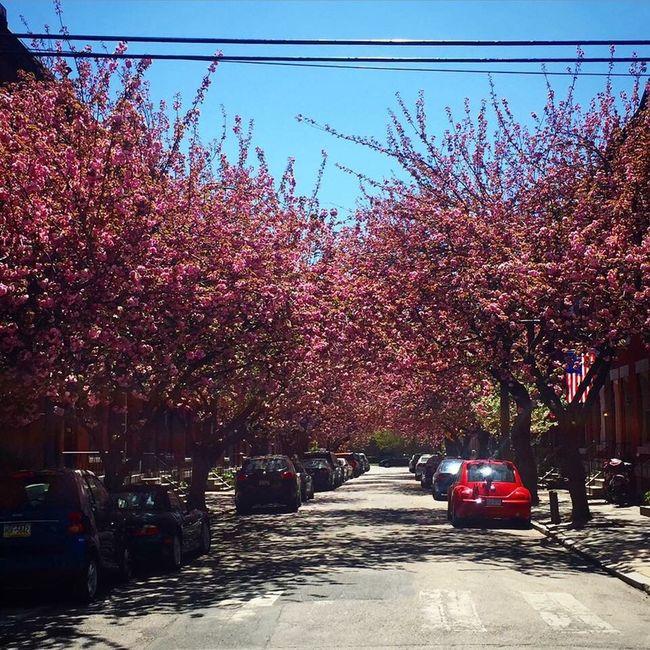 A beautiful day in the neighborhood EyeEm Best Shots ATouristInMyOwnCity TheSidewalksOfTheCity ScenesFromTheStreet