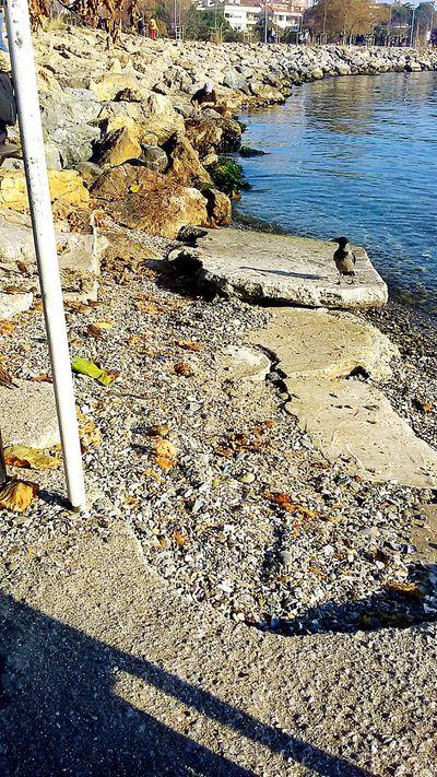 Sea View Seaside Suadiyesahil Istanbul Turkey