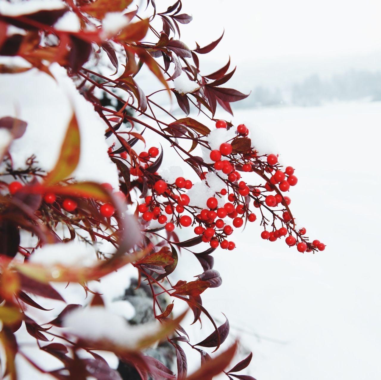 Snow Flowers Winter