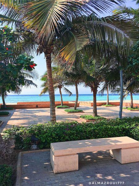 Tree Beach Sea تصويري  المزروعي EyeEm Team Eyeem Photography Saudi Arabia جدة Jeddah EyeEm السعودية  EyeEmBestPics Looking At Camera Almazroui IPhone مدينة_الملك_عبدالله_الاقتصادية EyeEmNewHere IPhon6