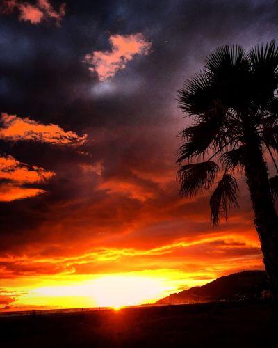 Sunset Beauty In Nature Palm Tree Scenics Orange Color Nature Sky
