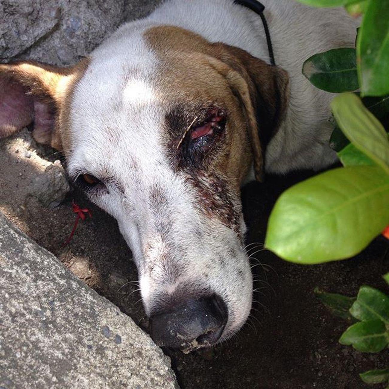Perrito de la calle herido 💔😔 Ayuda Dog Wounded Help 😭