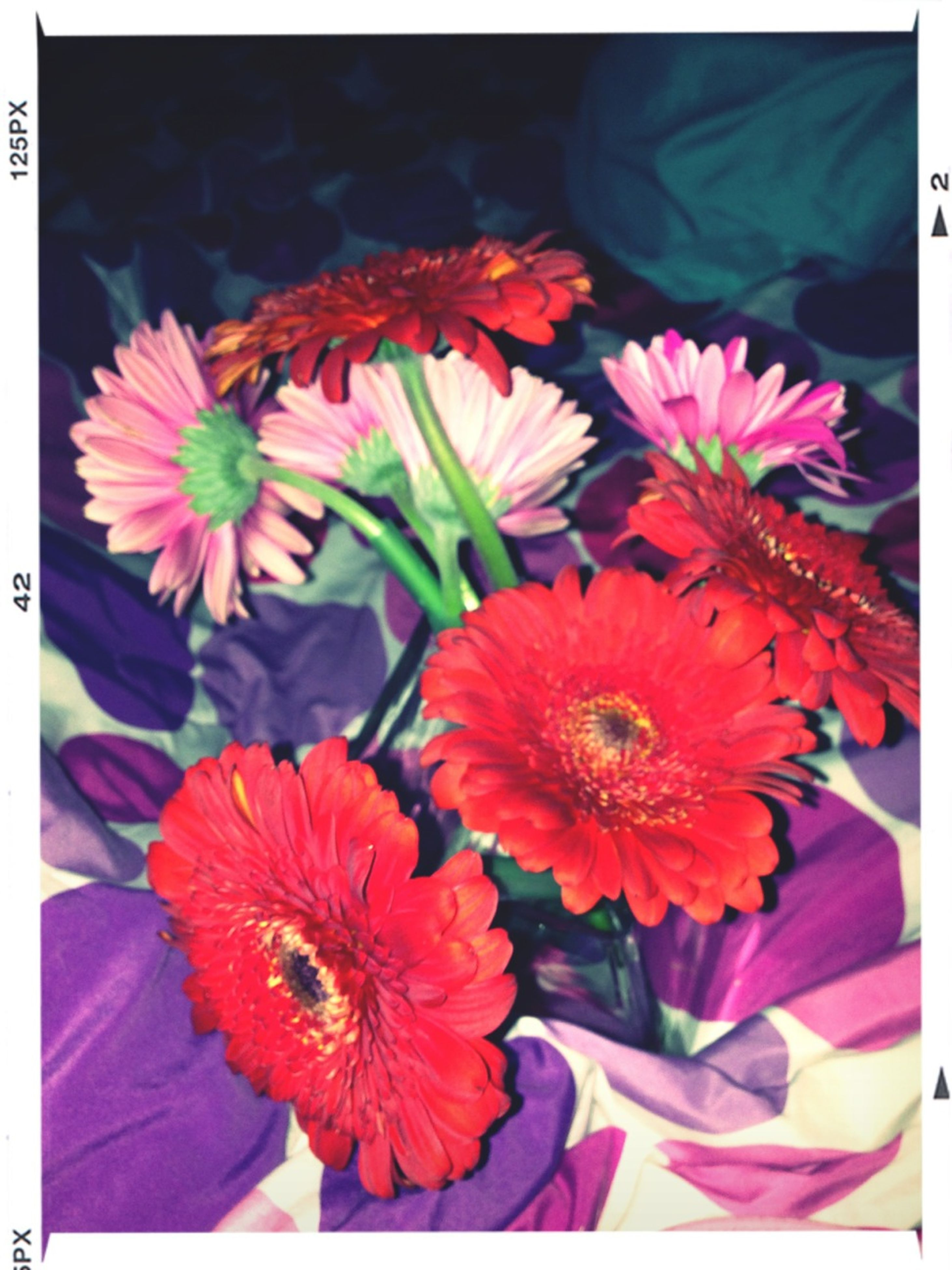 transfer print, flower, petal, auto post production filter, freshness, fragility, flower head, beauty in nature, pollen, red, blooming, growth, nature, orange color, multi colored, high angle view, close-up, plant, in bloom, yellow