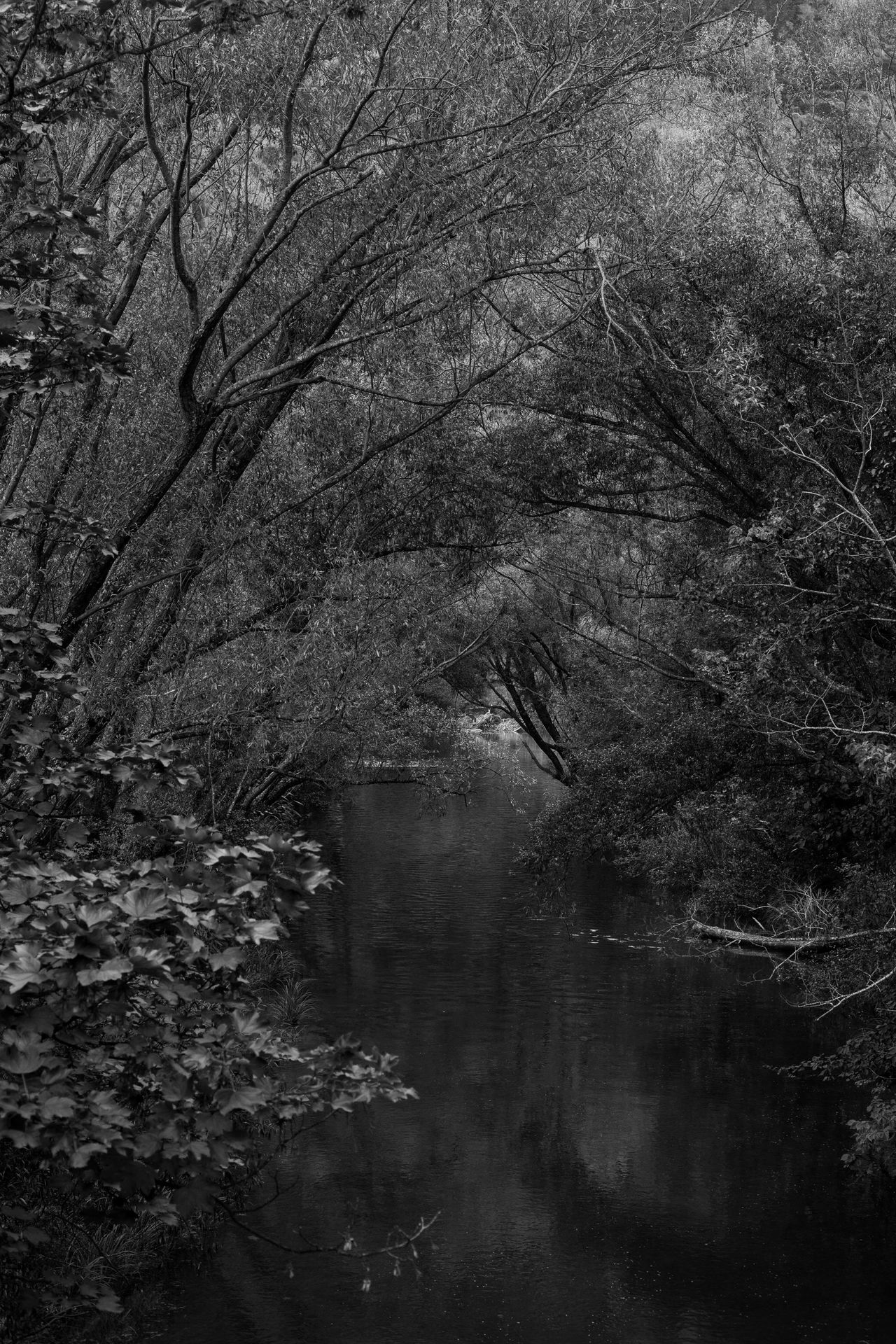 Beauty In Nature Blackandwhite Bw_collection Calm Canon Day Field Forest Grass Growth House Landscape Lush - Description Maitai Nature No People Non-urban Scene Outdoor Photography Outdoors River Scenics Sky Tranquility EyeEmNewHere