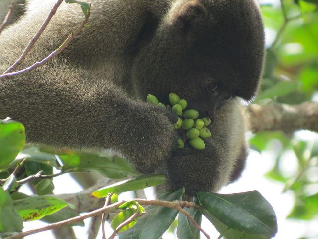 Amazon Amazon - Brazil Amazon Rainforest Amazon River Animal Up Close Animals In The Wild Brazil Close-up Monkey Nature At Its Best Nature Up Close Primate