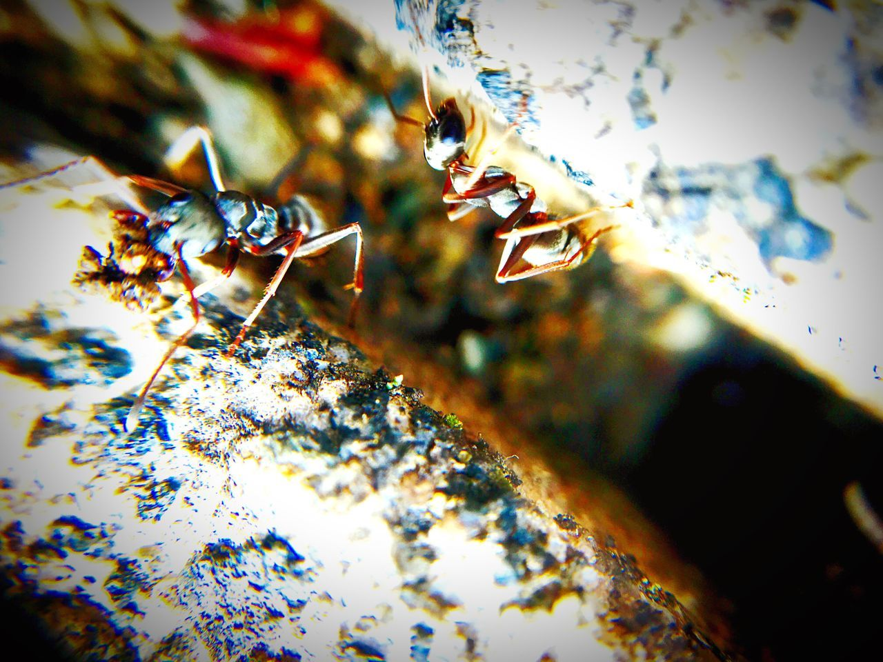 animal themes, insect, animals in the wild, close-up, one animal, no people, animal wildlife, day, bee, outdoors, nature