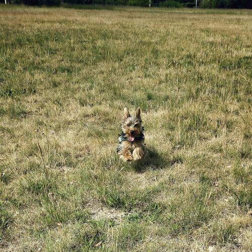 Walking Around Taking Photos Park View Park Sanssouci Park Dog Dog Love Puppy flying Superdog