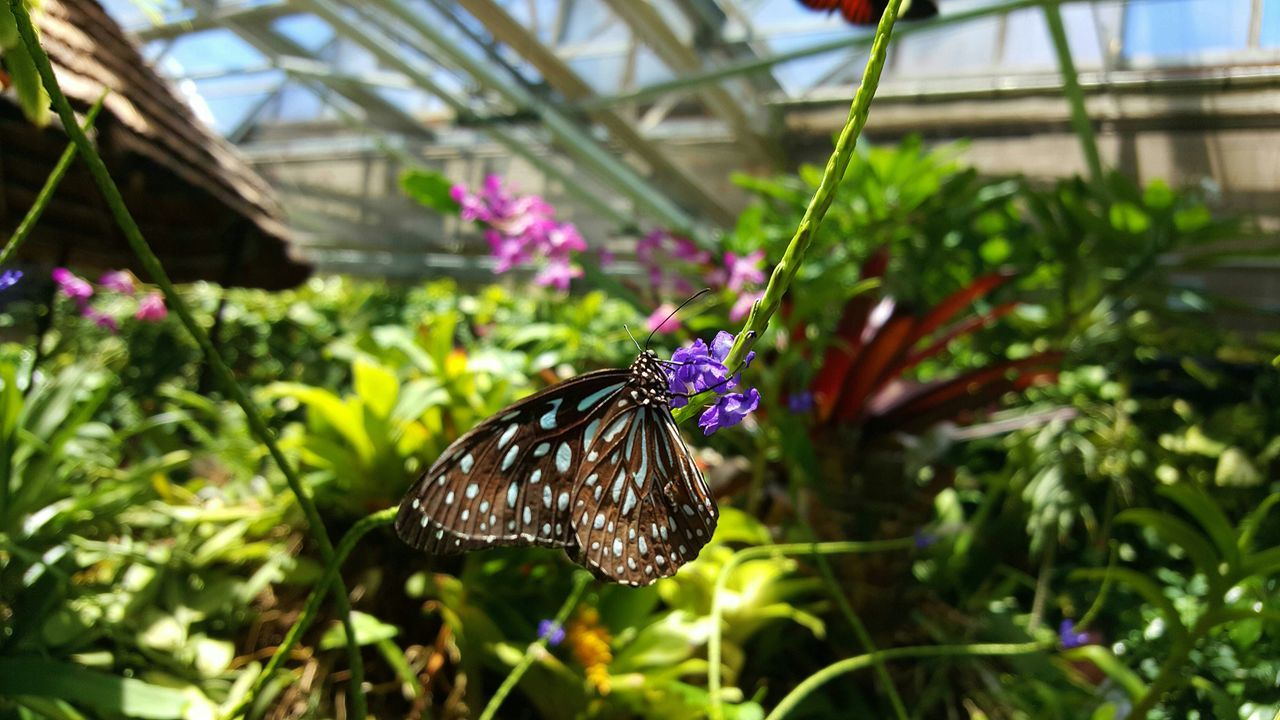 Close-Up Of Butterfly Pollinating On Flower At Greenhouse