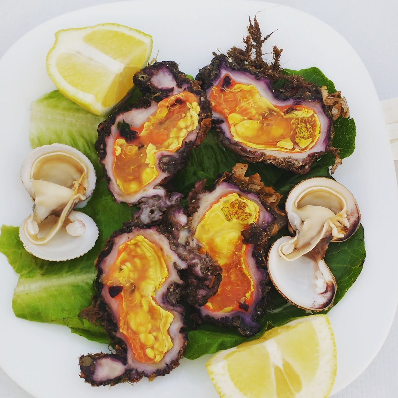 vibrant colours of Greek oysters Greek Seafoods Giant Clams SHELLFISH  Kalymnos Fresh Sea Water Taste Fresh From The Sea Fouskes Fousces Violet Uovo Del Mare Clams Unusual Seafood Orange Color Orange Seafood Rock Rocky Seafood Like An Oyster Like Sea Urchin Delicious Enjoy Sea Food Vibrant Colours Visual Feast
