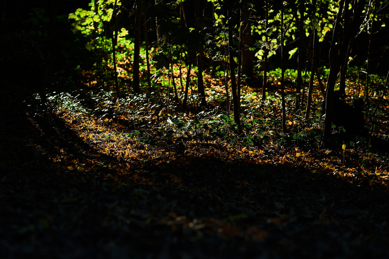 60mm Autumn Autumn Colors Beauty In Nature Capture The Moment Close-up Contrast EyeEm Nature Lover Germany Nature Nature_collection Night No People Outdoors Scenics Shadow Shadows & Lights Sigma Sony Sony A6000 Sun Tranquility Tree Water Wonderful Nature