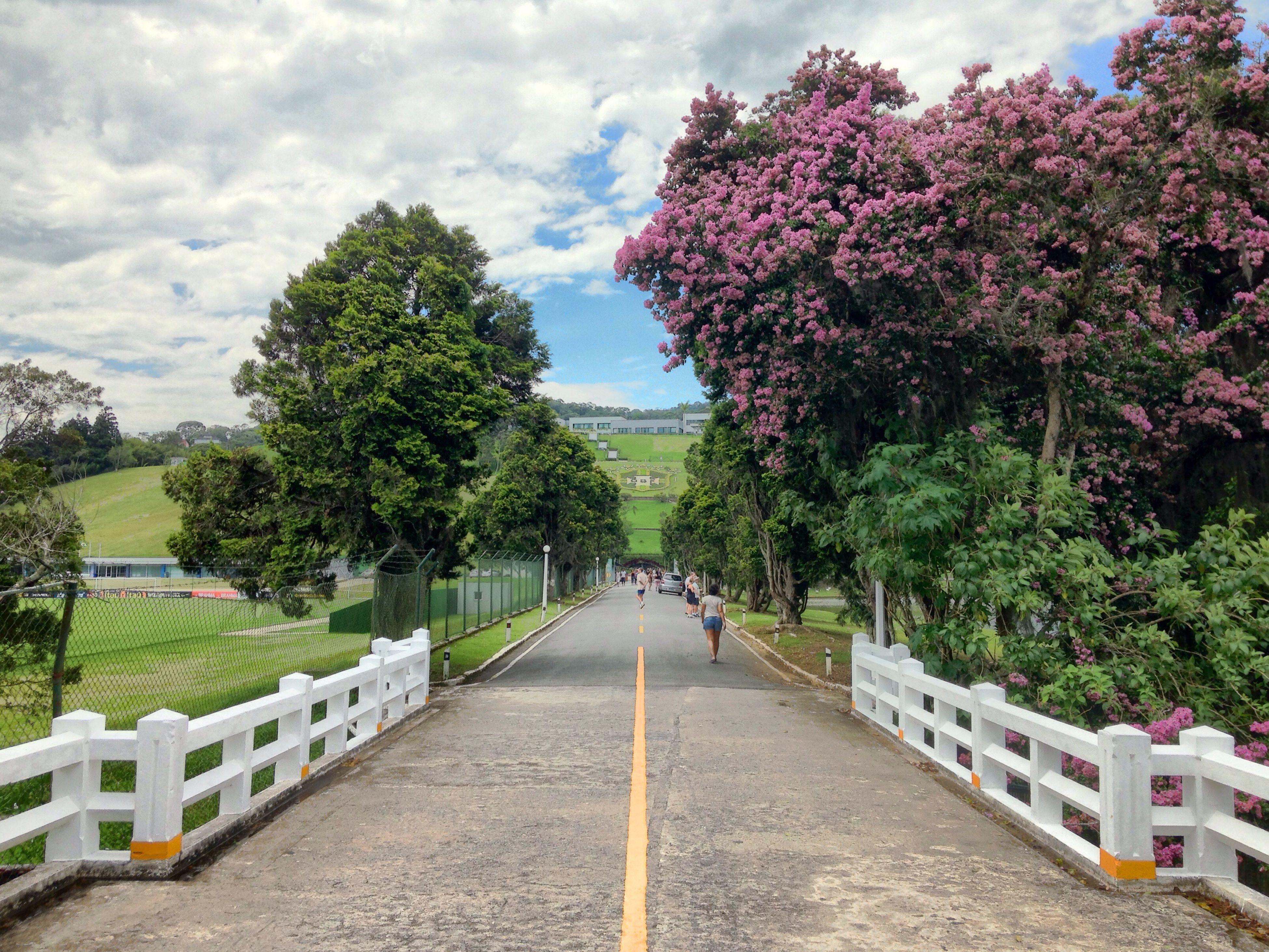 tree, sky, the way forward, growth, cloud - sky, built structure, incidental people, footpath, park - man made space, nature, architecture, walkway, diminishing perspective, flower, cloud, building exterior, beauty in nature, day, treelined, outdoors