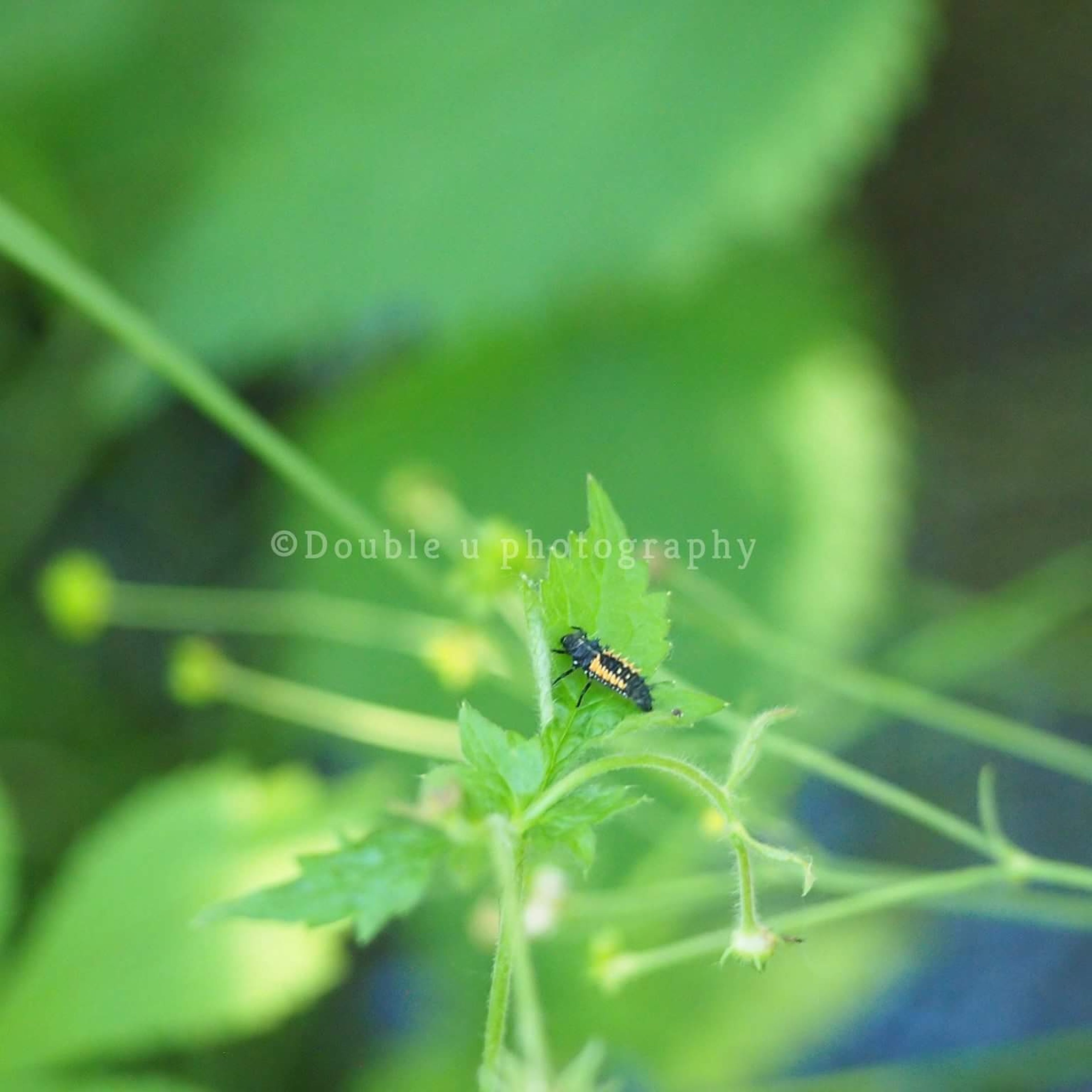 insect, one animal, animal themes, animals in the wild, green color, leaf, animal wildlife, day, nature, outdoors, close-up, plant, no people, grasshopper