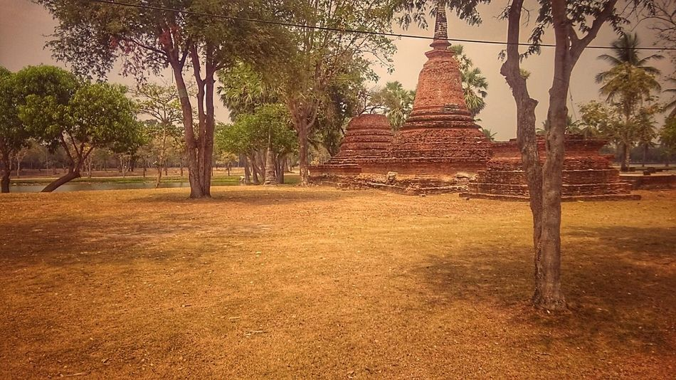 Tree No People Religion Day Sky Nature First Eyeem Photo Sukhothai, Thailand History Tree Temple Ancient Sukhothaihistoricalpark Sukhothai Historical Park SukhothaiDynasty Temples Temple Architecture Welcome To Black Unesco UNESCO World Heritage Site Unesco World Heritage Unescoworldheritage