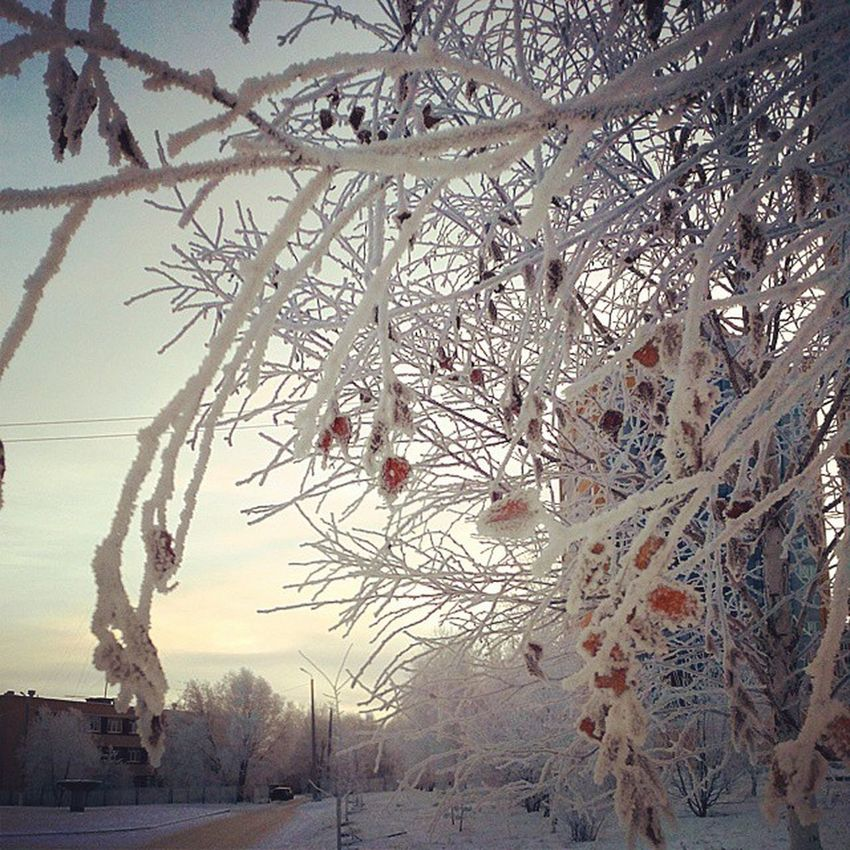 Omsk Siberia Snow Hoarfrost Morning омск сибирь иней снег мороз